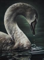 Young Swan Portrait by emilyjhorner
