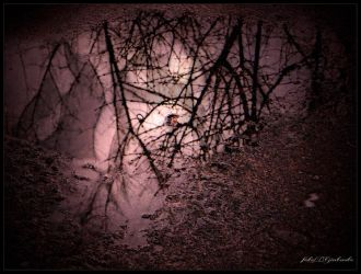 Reflection in the water........3 by gintautegitte69