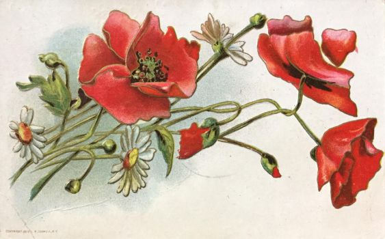 Poppies Perfection by Yesterdays-Paper