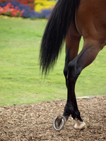 Thoroughbred Back legs by photographyflower