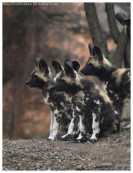African Wild Dog - Pups 004 by ShineOverShadow