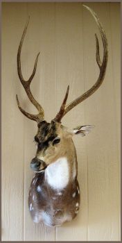 Tall, Dark, and Handsome by WeirdCityTaxidermy