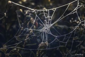 In the ice spider web by wiwaldi24