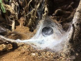 web cave 1 by yellowicous-stock
