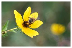 Bee Happy by MSJames