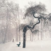 Resilience. Inviting winter for some tea. by 8moments