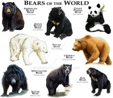 Bears of the World by rogerdhall