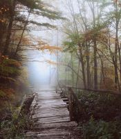 Path  forest IV- premium stock by Consuelo-Parra