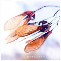 Don't fly away by ironicna