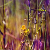 The Fields Of Color IV by MarcoHeisler