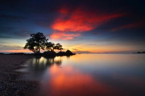 Tree At Sunset by comsic