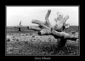 Grey Ghosts 1 vers 2 by misteriddles