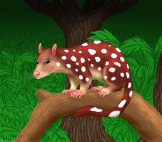 Spotted-Tailed Quoll by Akril15