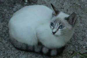 Cat Stock 061 by Malleni-Stock