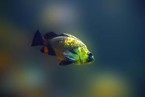 fish 10 by oxygun