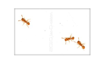 three little ant by leodakbar