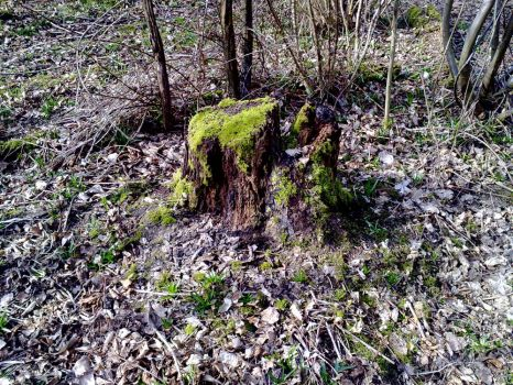 Mossy Tree Stump by Kitsch-Craft