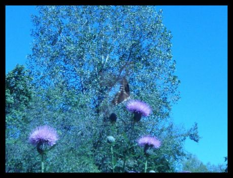 Butterfly and Thistle by Darqflame