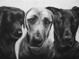 Dogs by candysamuels