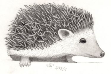 Hedgehog by swanofgrey
