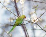 Flower parakeet by Morgan-Lou