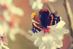 First butterfly oh this year by Samantha-meglioli
