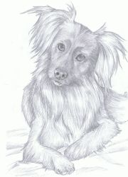 dog drawing by RainyApplePie