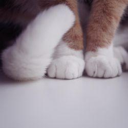 paws by KittenKayleigh