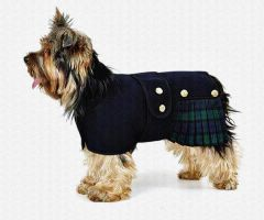 Wee lovely dug by Quadraro