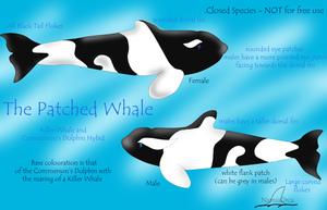 The Patched Whale Information Sheet by NarniaOrca