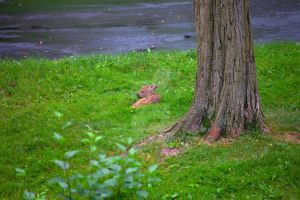 Fawn in the Rain by photohooks