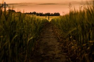 fields of the setting sun 03 by Katyma
