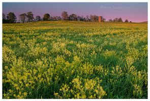 The Yellow Field by Mystik-Rider