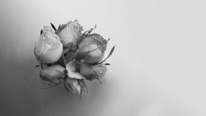 Grey roses_2 by Moolver-sin