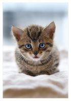 Kitten by antiparticle