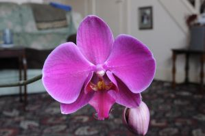 orchid 3 by density-stock