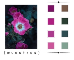 A pink flower. |muestras| by MiliDirectionerJB