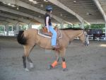 BUckskin, at horse show by TwinWolfSister