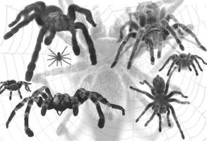 Spiders brushes by freak76