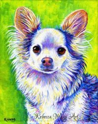 Colorful Pet Portrait - Gizmo by rebeccawangart