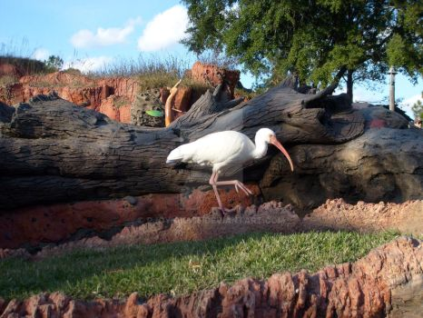 Splash Mountain Ibis by rjoyhelvie