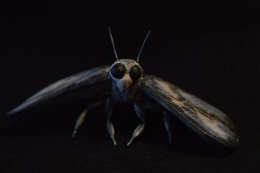 Moth Puppet (Front) by CrosslineAnimator