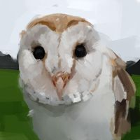 ASOT440: Barn Owl Portrait by Hamsta180