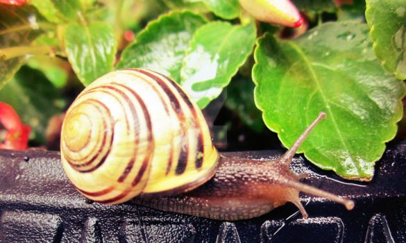 A snail. by ArtisticTalents