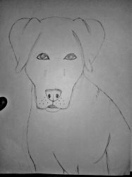 First Finished Dog Sketch! by TheRebelWithNoCause