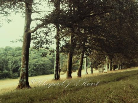 Line of Trees by WhispersOfAHeart