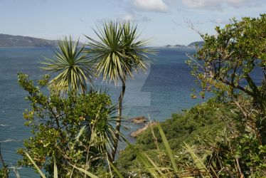Somes Island Wellington - Ocean and cabbage trees by VenusFlowerDesignNZ