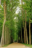 In Versailles' forest by ShlomitMessica