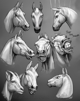 Horse Head Dump by SquatinaCaprium