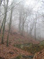 UNRESTRICTED - November '09 - Foggy Forest 4 by frozenstocks